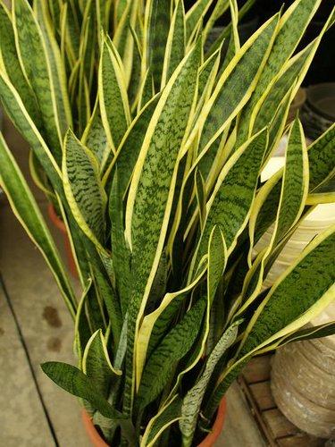 Blog rosa rosam florister a y decoraci n p gina 4 for Plantas verdes de interior