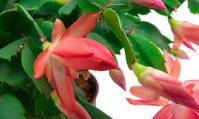 cactuspascua6