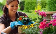 cuidados de plantas