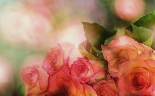 roses-3141486_1920