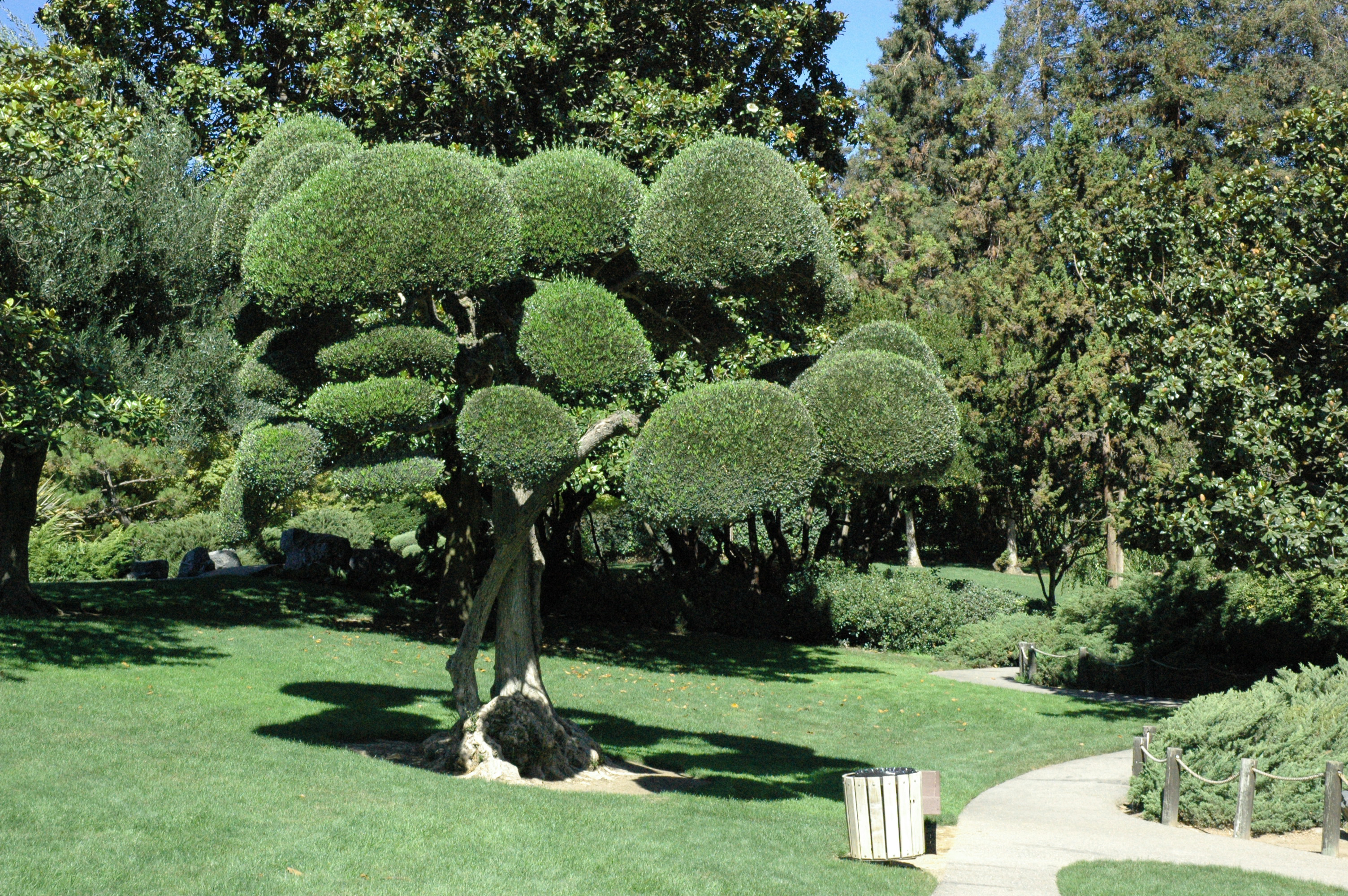 Cuida tus plantas rosa rosam - Como se cuida un bonsai ...